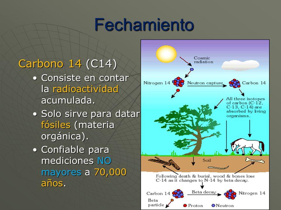 Carbono 14 (C14) Consiste en contar la radioactividad acumulada.Consiste en contar la radioactividad acumulada. Solo sirve para datar fósiles (materia