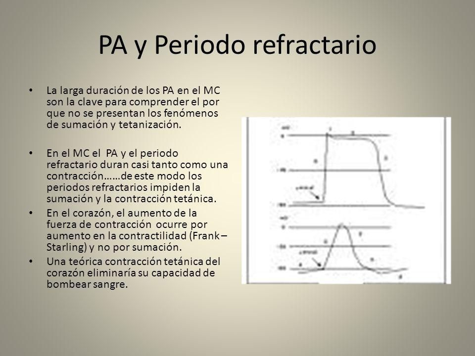 PA y Periodo refractario La larga duración de los PA en el MC son la clave para comprender el por que no se presentan los fenómenos de sumación y teta