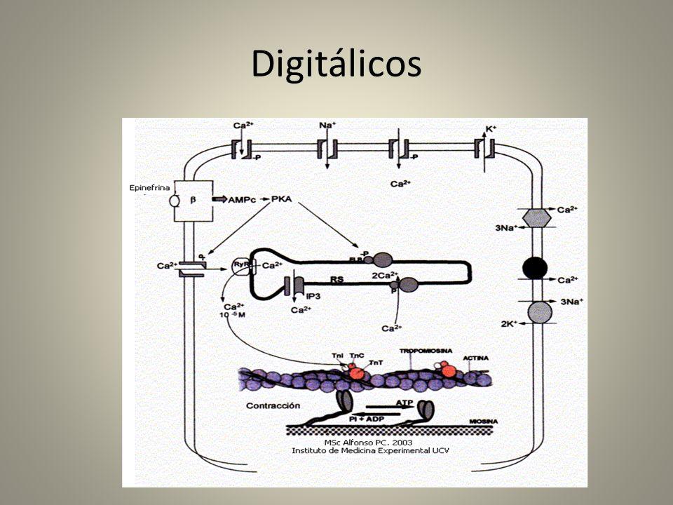 Digitálicos