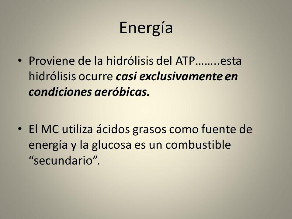 Energía Proviene de la hidrólisis del ATP……..esta hidrólisis ocurre casi exclusivamente en condiciones aeróbicas. El MC utiliza ácidos grasos como fue