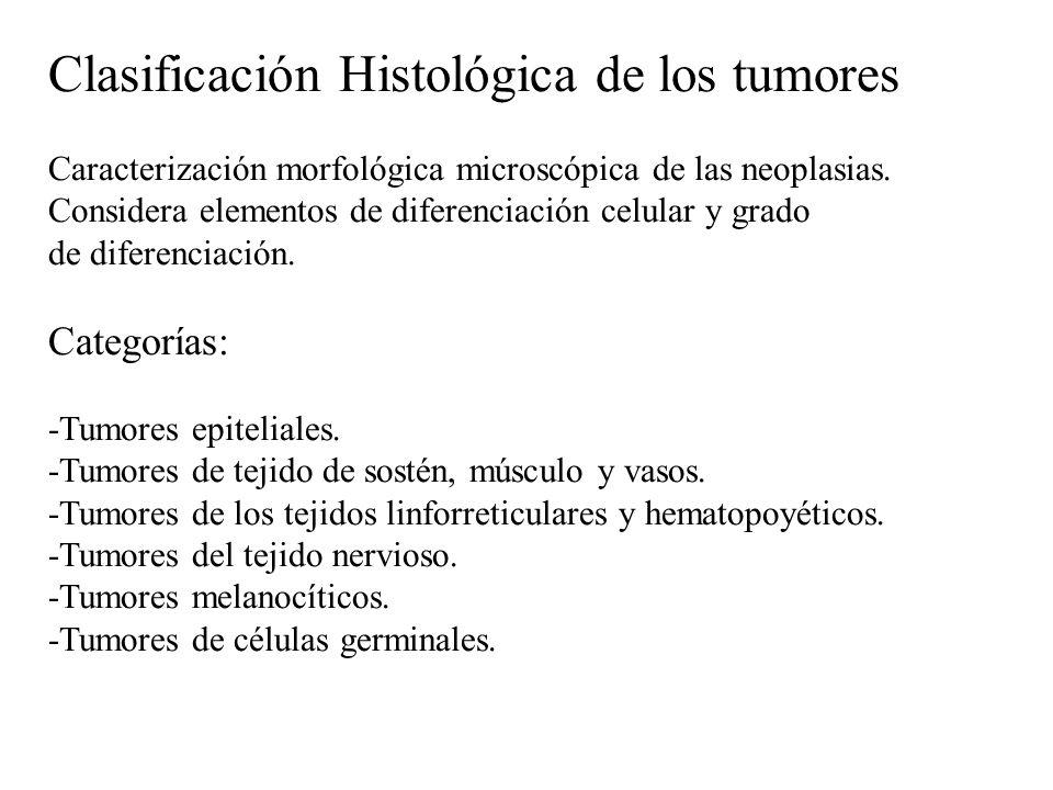 Clasificación Histológica de los tumores Caracterización morfológica microscópica de las neoplasias. Considera elementos de diferenciación celular y g