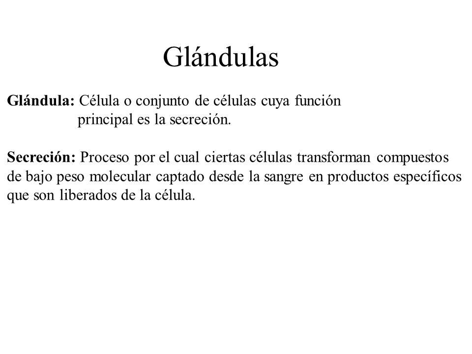 Glándula: Célula o conjunto de células cuya función principal es la secreción. Secreción: Proceso por el cual ciertas células transforman compuestos d