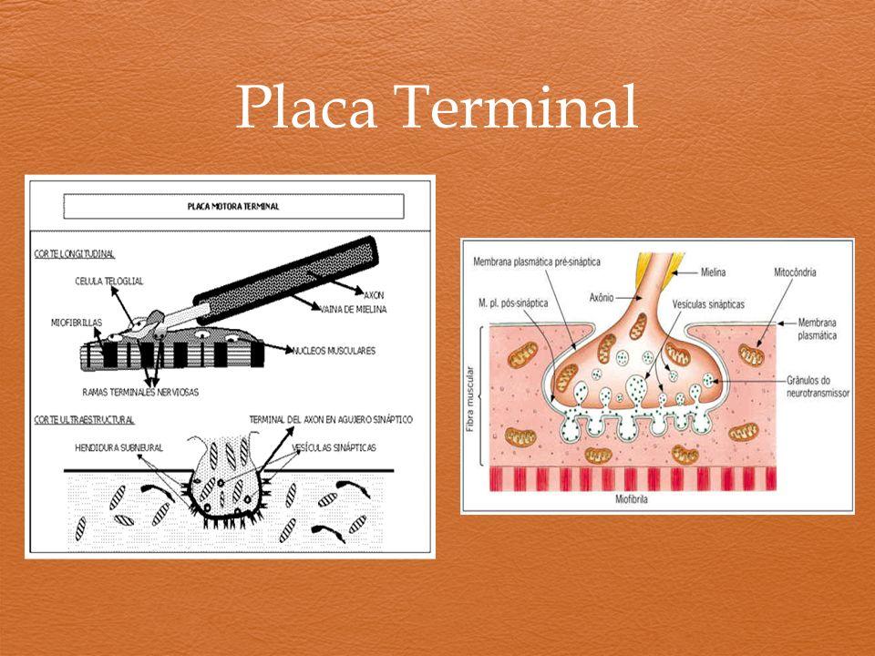 Placa Terminal