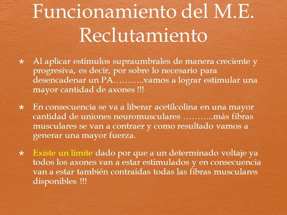 Funcionamiento del M.E. Reclutamiento Al aplicar estímulos supraumbrales de manera creciente y progresiva, es decir, por sobre lo necesario para desen