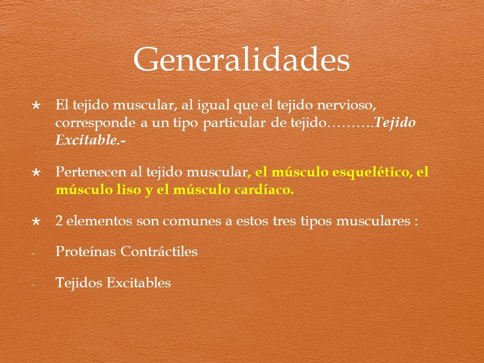 Generalidades El tejido muscular, al igual que el tejido nervioso, corresponde a un tipo particular de tejido………. Tejido Excitable.- Pertenecen al tej