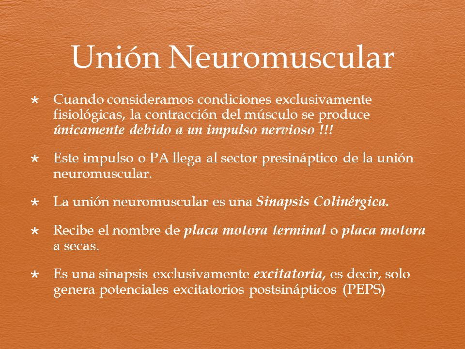 Unión Neuromuscular Cuando consideramos condiciones exclusivamente fisiológicas, la contracción del músculo se produce únicamente debido a un impulso