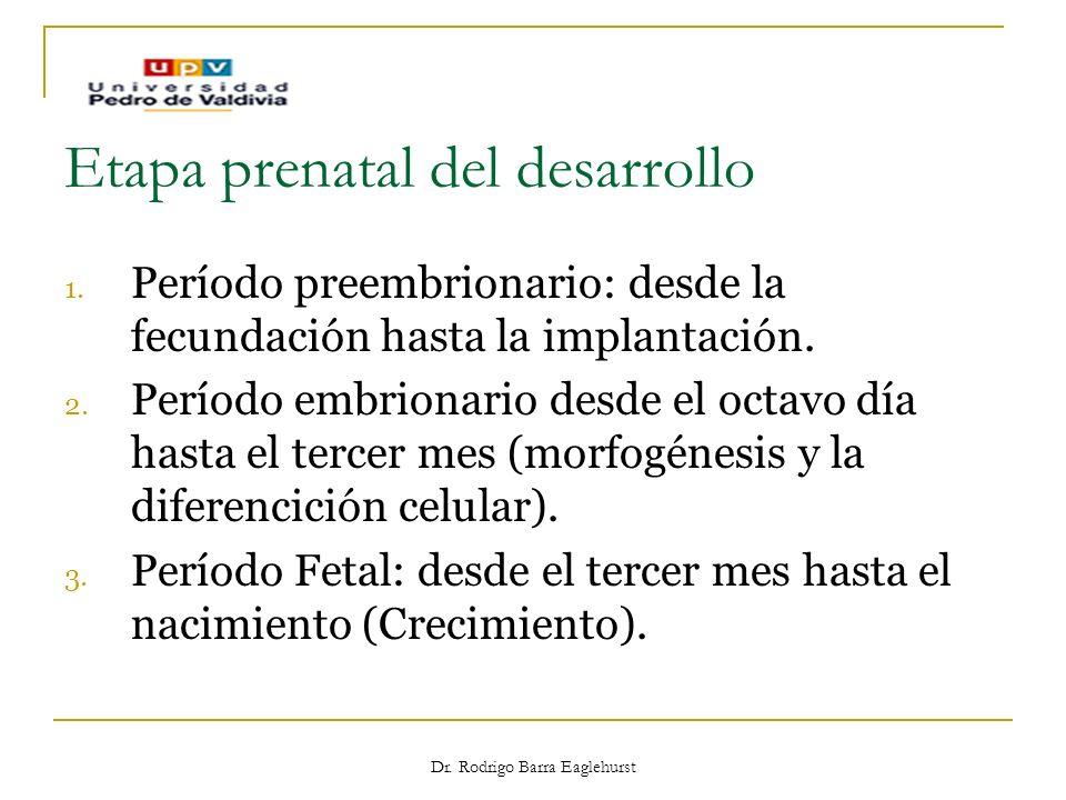 Dr. Rodrigo Barra Eaglehurst Etapa prenatal del desarrollo 1. Período preembrionario: desde la fecundación hasta la implantación. 2. Período embrionar