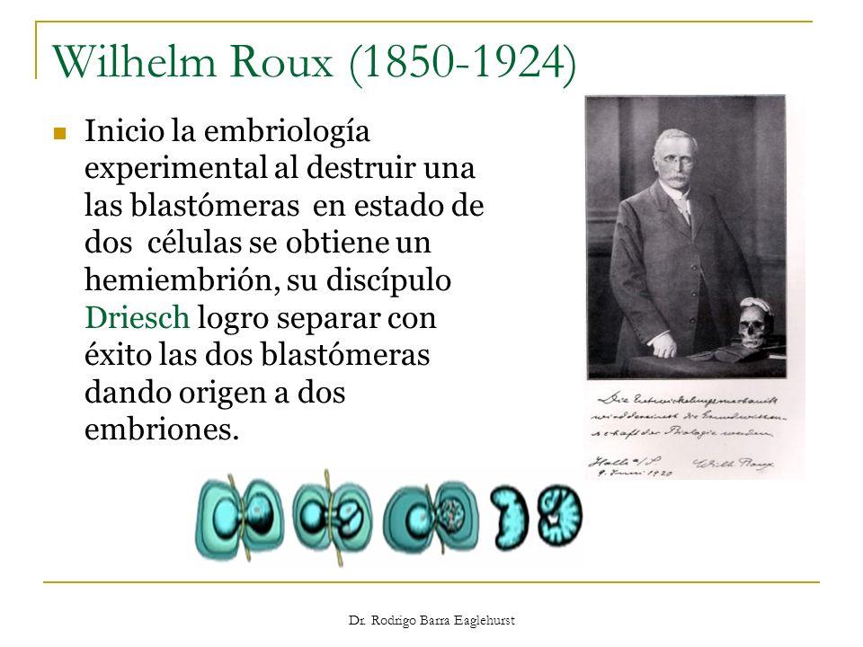 Wilhelm Roux (1850-1924) Inicio la embriología experimental al destruir una las blastómeras en estado de dos células se obtiene un hemiembrión, su dis