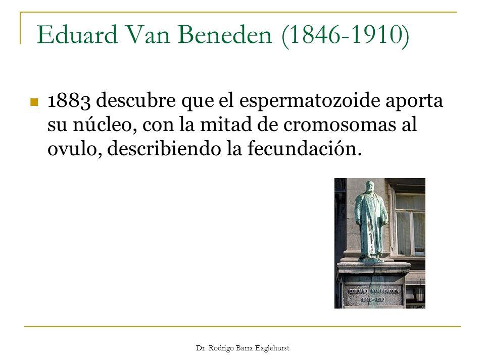 Eduard Van Beneden (1846-1910) 1883 descubre que el espermatozoide aporta su núcleo, con la mitad de cromosomas al ovulo, describiendo la fecundación.