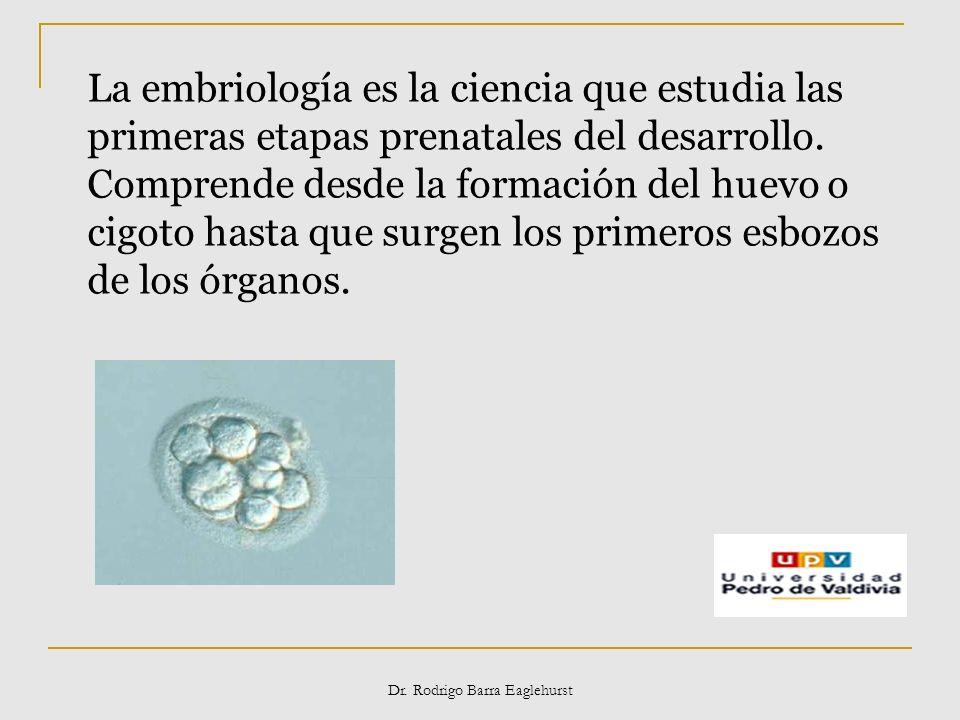 Dr. Rodrigo Barra Eaglehurst La embriología es la ciencia que estudia las primeras etapas prenatales del desarrollo. Comprende desde la formación del