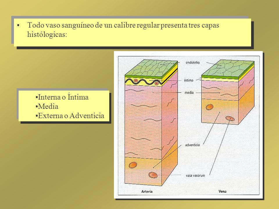 Todo vaso sanguíneo de un calibre regular presenta tres capas histólogicas: Interna o Íntima Media Externa o Adventicia