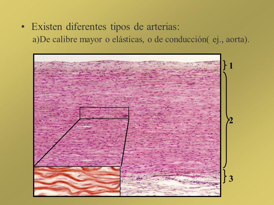 Existen diferentes tipos de arterias: a)De calibre mayor o elásticas, o de conducción( ej., aorta). 1 2 3