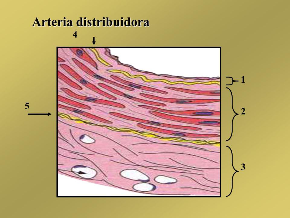 1 1 2 3 4 5 Arteria distribuidora