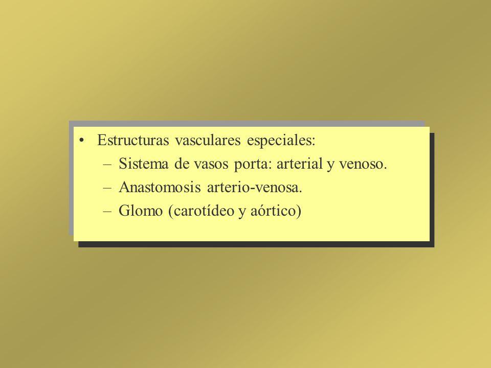 Estructuras vasculares especiales: –Sistema de vasos porta: arterial y venoso. –Anastomosis arterio-venosa. –Glomo (carotídeo y aórtico)