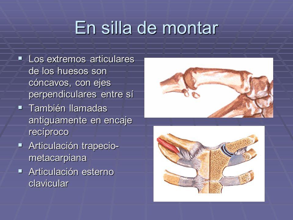 En silla de montar Los extremos articulares de los huesos son cóncavos, con ejes perpendiculares entre sí Los extremos articulares de los huesos son c