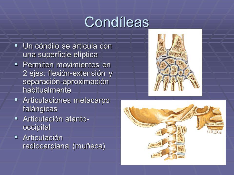 Condíleas Un cóndilo se articula con una superficie elíptica Un cóndilo se articula con una superficie elíptica Permiten movimientos en 2 ejes: flexió