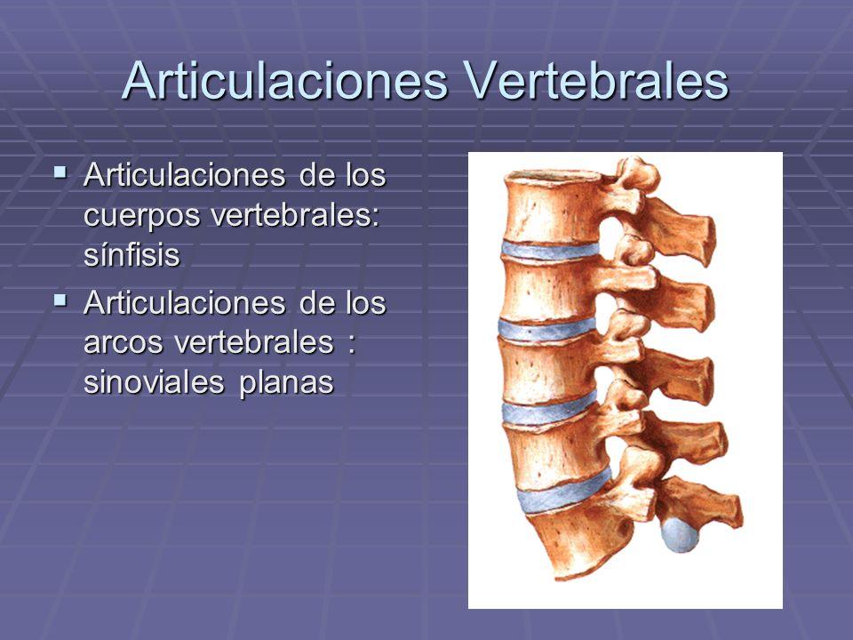 Articulaciones Vertebrales Articulaciones de los cuerpos vertebrales: sínfisis Articulaciones de los cuerpos vertebrales: sínfisis Articulaciones de l