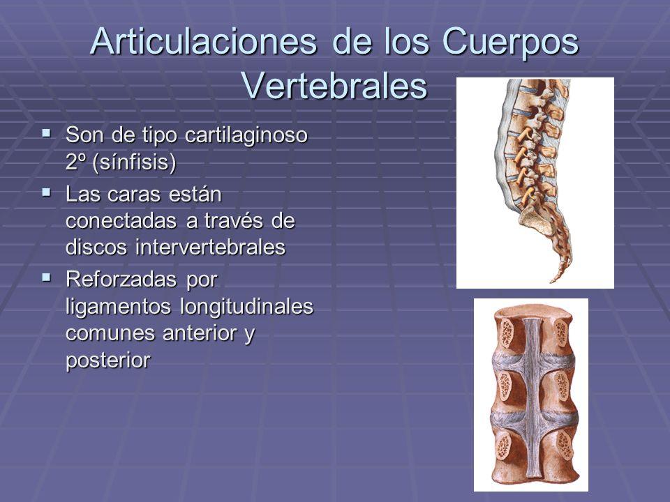 Articulaciones de los Cuerpos Vertebrales Son de tipo cartilaginoso 2º (sínfisis) Son de tipo cartilaginoso 2º (sínfisis) Las caras están conectadas a