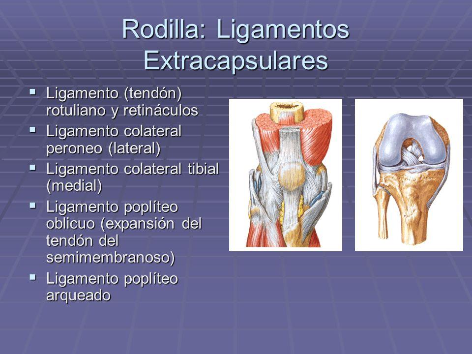 Rodilla: Ligamentos Extracapsulares Ligamento (tendón) rotuliano y retináculos Ligamento (tendón) rotuliano y retináculos Ligamento colateral peroneo