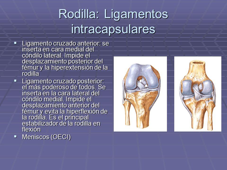 Rodilla: Ligamentos intracapsulares Ligamento cruzado anterior: se inserta en cara medial del cóndilo lateral. Impide el desplazamiento posterior del