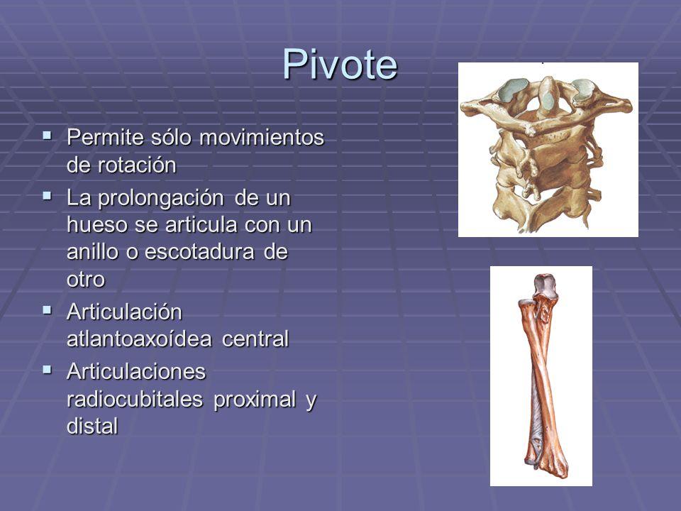 Pivote Permite sólo movimientos de rotación Permite sólo movimientos de rotación La prolongación de un hueso se articula con un anillo o escotadura de
