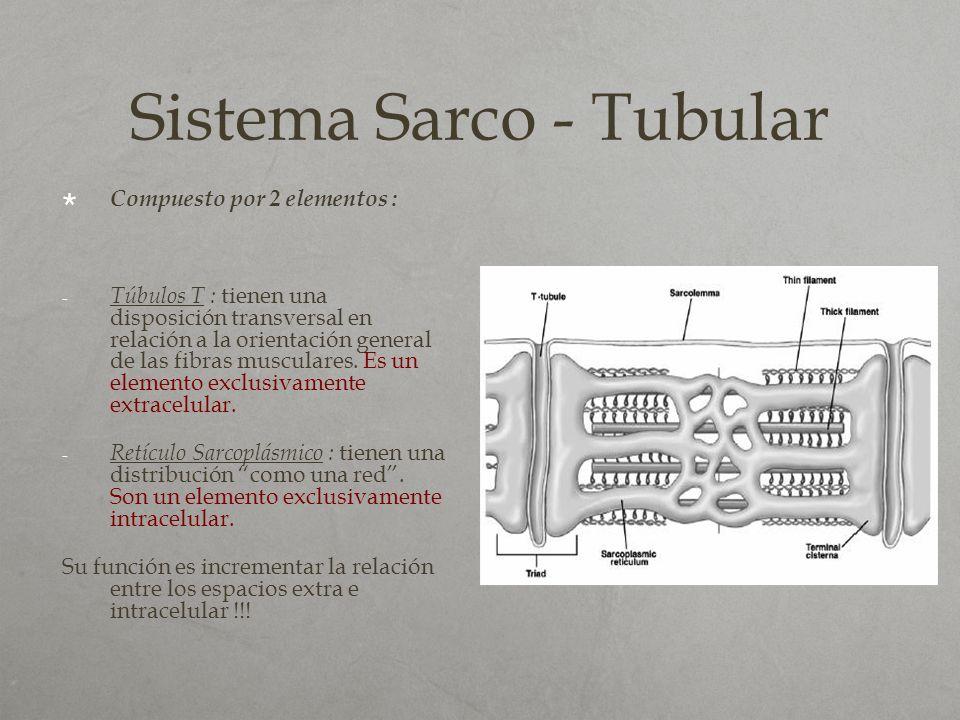Sistema Sarco - Tubular Compuesto por 2 elementos : - Túbulos T : tienen una disposición transversal en relación a la orientación general de las fibra