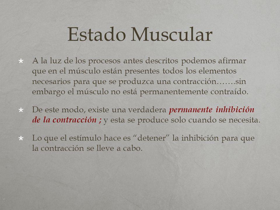 Estado Muscular A la luz de los procesos antes descritos podemos afirmar que en el músculo están presentes todos los elementos necesarios para que se