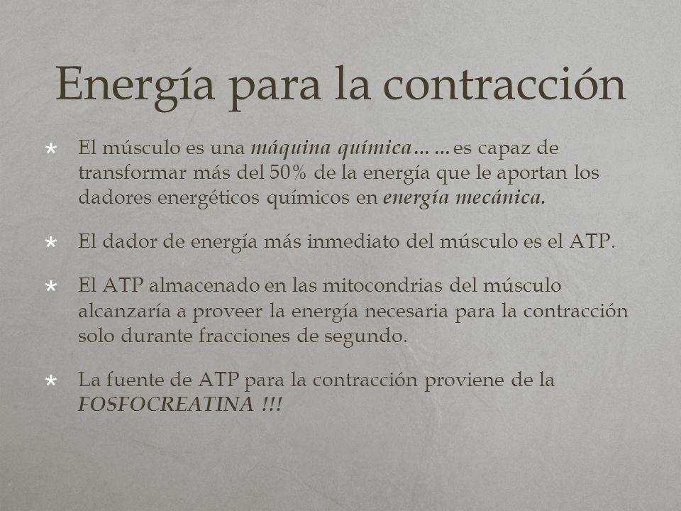 Energía para la contracción El músculo es una máquina química…… es capaz de transformar más del 50% de la energía que le aportan los dadores energétic