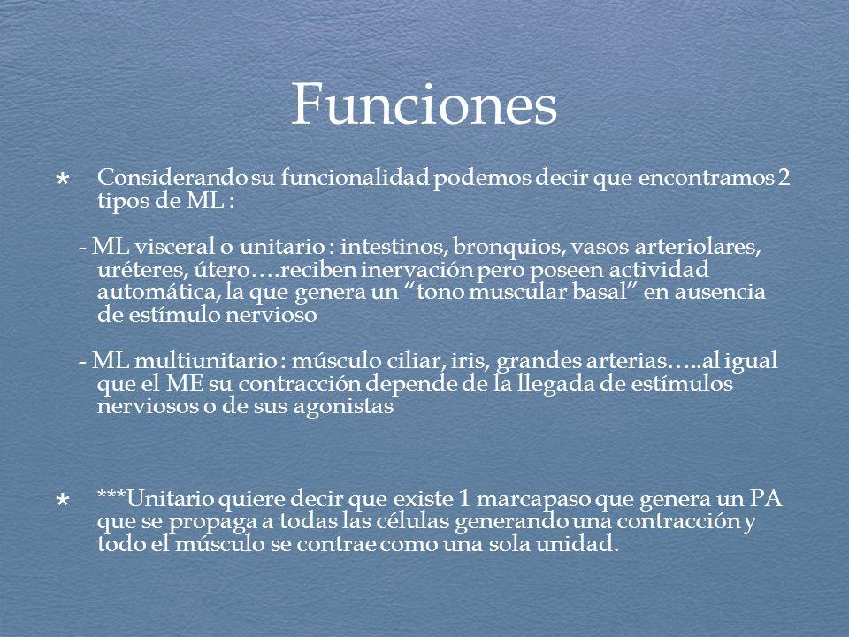 Funciones Considerando su funcionalidad podemos decir que encontramos 2 tipos de ML : - ML visceral o unitario : intestinos, bronquios, vasos arteriol