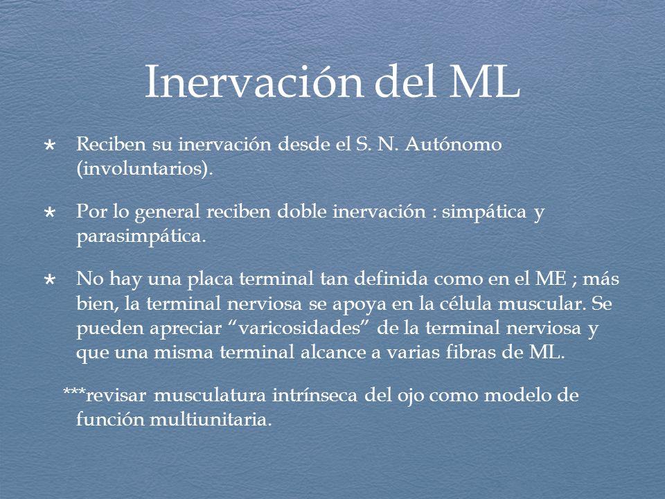 Inervación del ML Reciben su inervación desde el S. N. Autónomo (involuntarios). Por lo general reciben doble inervación : simpática y parasimpática.