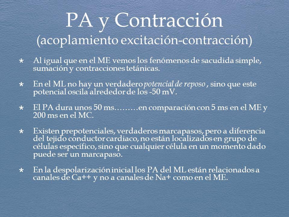 PA y Contracción (acoplamiento excitación-contracción) Al igual que en el ME vemos los fenómenos de sacudida simple, sumación y contracciones tetánica