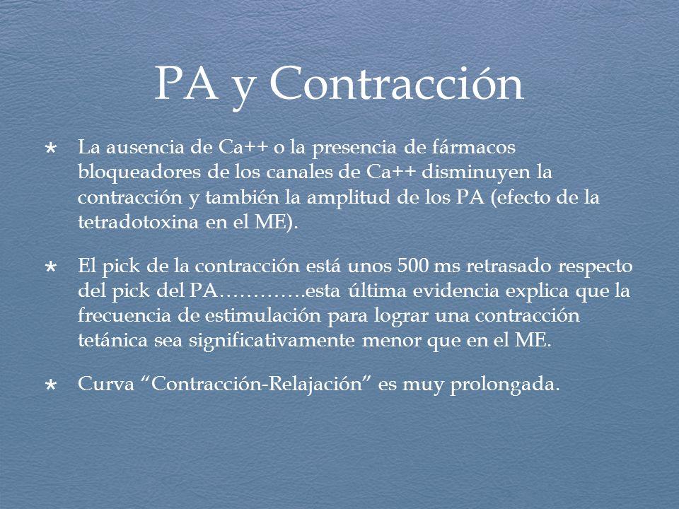 PA y Contracción La ausencia de Ca++ o la presencia de fármacos bloqueadores de los canales de Ca++ disminuyen la contracción y también la amplitud de