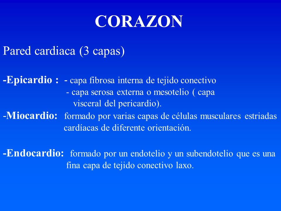 Pared cardiaca (3 capas) -Epicardio : - capa fibrosa interna de tejido conectivo - capa serosa externa o mesotelio ( capa visceral del pericardio). -M