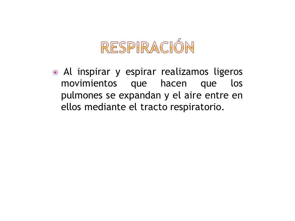 La respiración normal consiste en la sucesión rítmica y fluida de los movimientos de expansión (inspiración) y de retracción (espiración torácica) sin