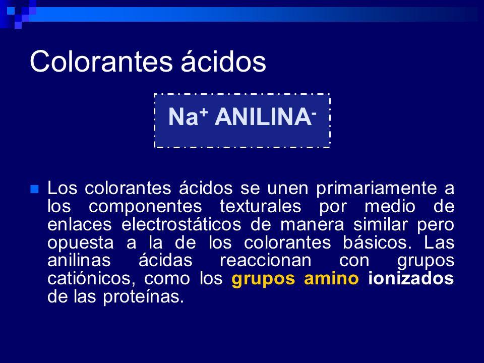 Colorantes ácidos Na + ANILINA - Los colorantes ácidos se unen primariamente a los componentes texturales por medio de enlaces electrostáticos de mane
