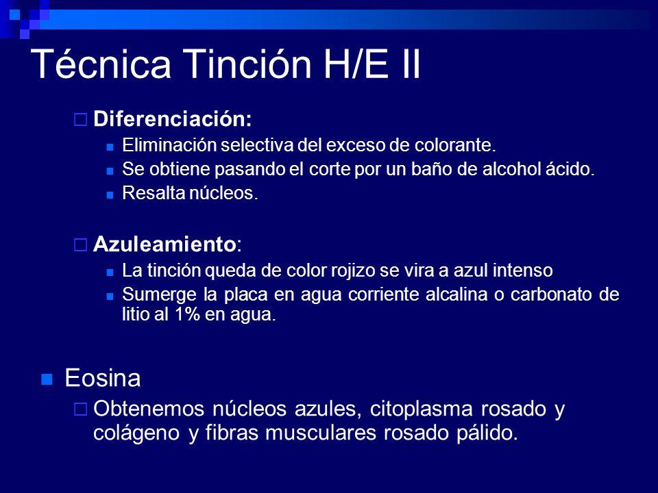 Técnica Tinción H/E II Diferenciación: Eliminación selectiva del exceso de colorante. Se obtiene pasando el corte por un baño de alcohol ácido. Resalt