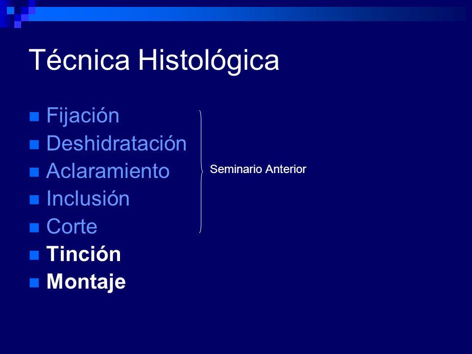 Técnica Histológica Fijación Deshidratación Aclaramiento Inclusión Corte Tinción Montaje Seminario Anterior