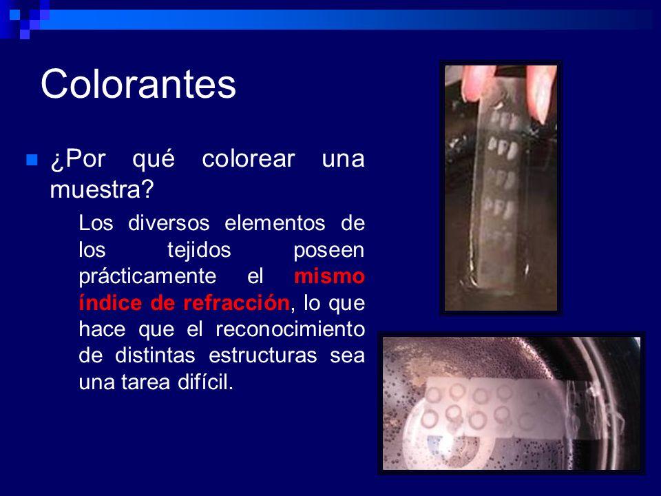 Colorantes ¿Por qué colorear una muestra? Los diversos elementos de los tejidos poseen prácticamente el mismo índice de refracción, lo que hace que el