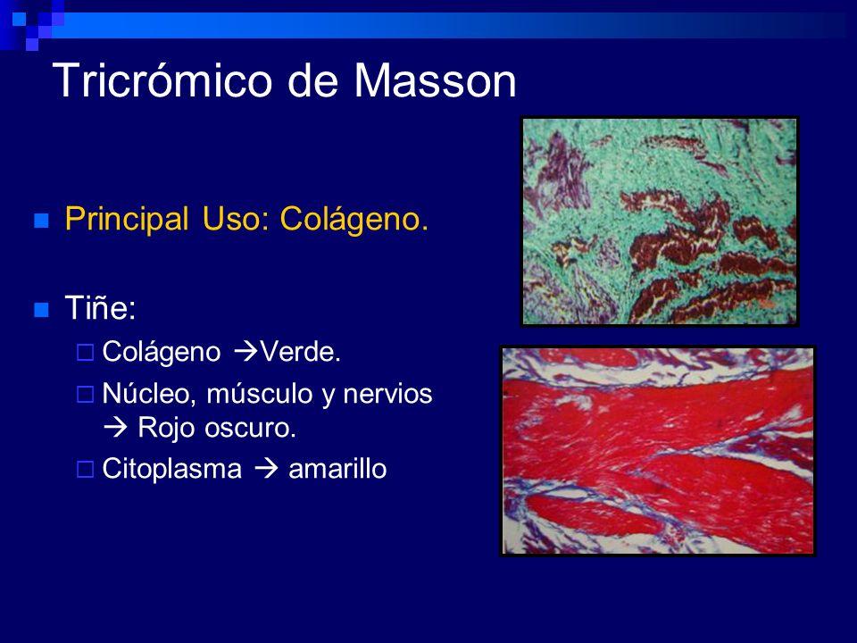 Tricrómico de Masson Principal Uso: Colágeno. Tiñe: Colágeno Verde. Núcleo, músculo y nervios Rojo oscuro. Citoplasma amarillo