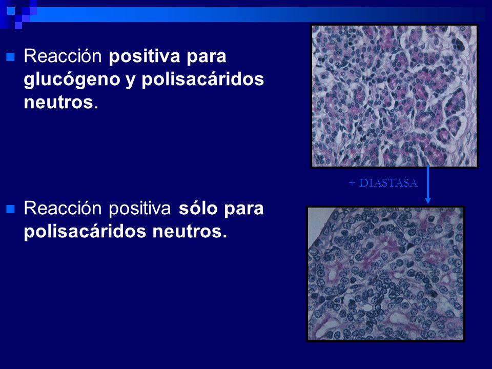 Reacción positiva para glucógeno y polisacáridos neutros. Reacción positiva sólo para polisacáridos neutros. + DIASTASA