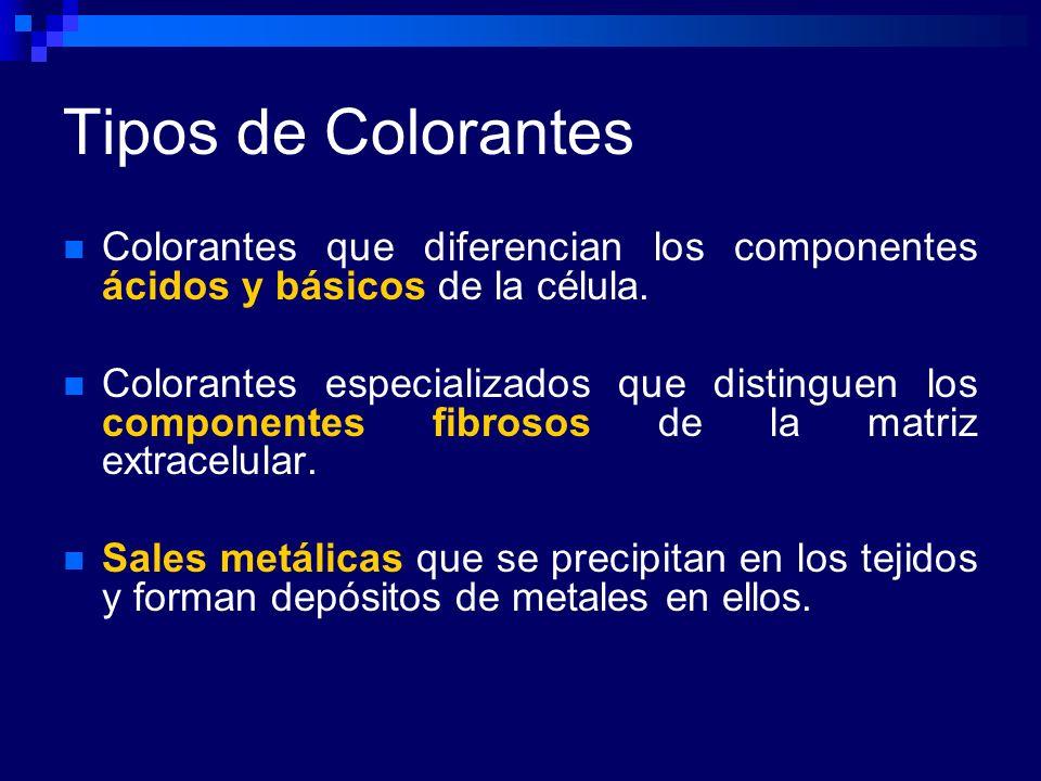 Tipos de Colorantes Colorantes que diferencian los componentes ácidos y básicos de la célula. Colorantes especializados que distinguen los componentes
