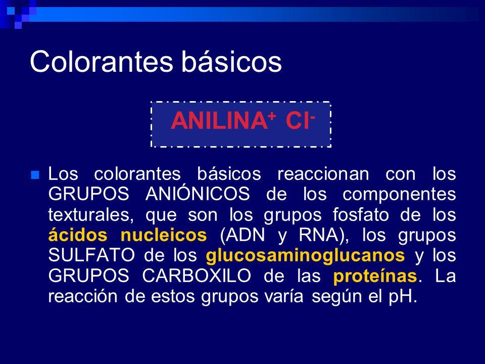 Eosinófilos Tinción Giemsa, eosinófilos se ven rojos