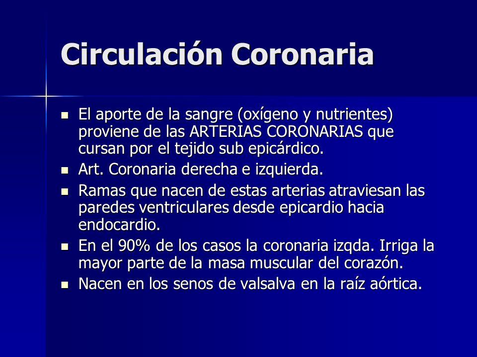 Circulación Coronaria El aporte de la sangre (oxígeno y nutrientes) proviene de las ARTERIAS CORONARIAS que cursan por el tejido sub epicárdico. El ap