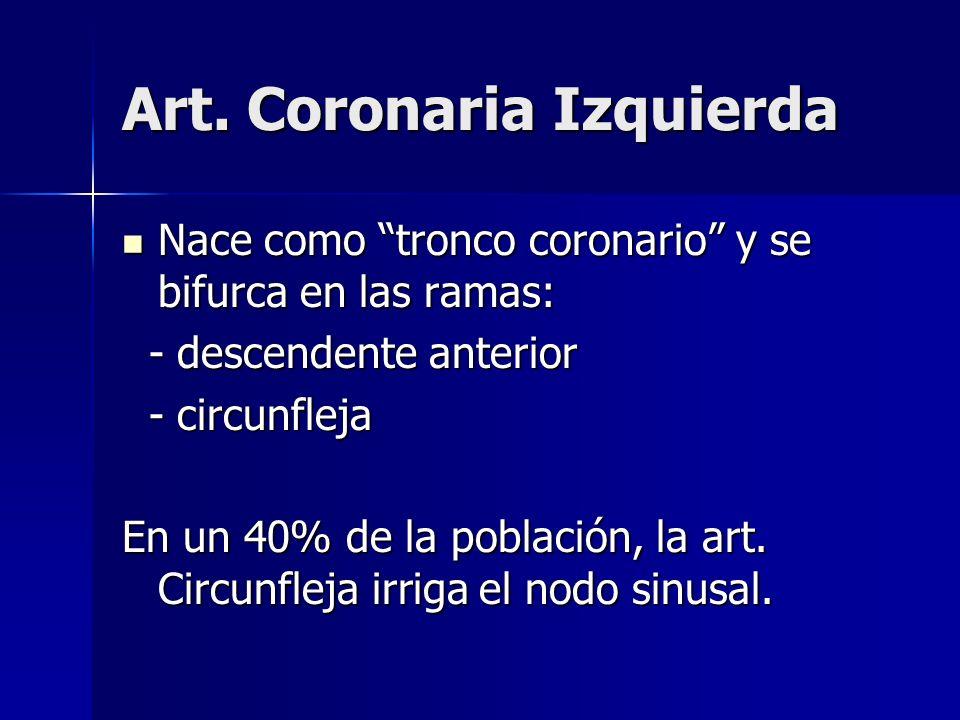 Art. Coronaria Izquierda Nace como tronco coronario y se bifurca en las ramas: Nace como tronco coronario y se bifurca en las ramas: - descendente ant