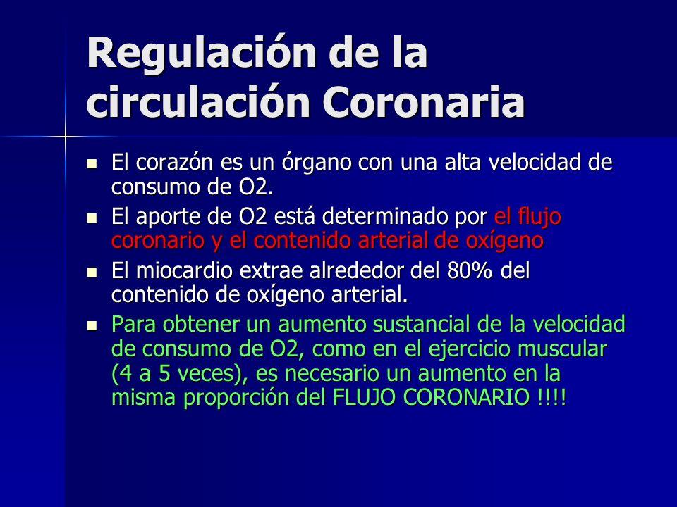Regulación de la circulación Coronaria El corazón es un órgano con una alta velocidad de consumo de O2. El corazón es un órgano con una alta velocidad