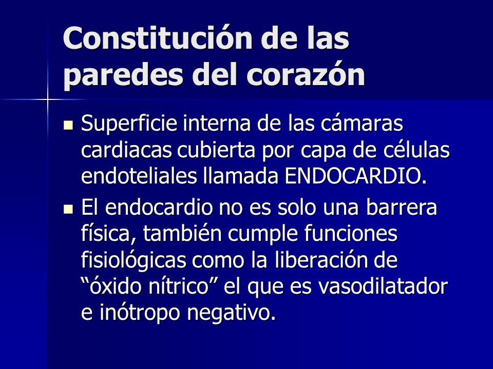 Constitución de las paredes del corazón Superficie interna de las cámaras cardiacas cubierta por capa de células endoteliales llamada ENDOCARDIO. Supe