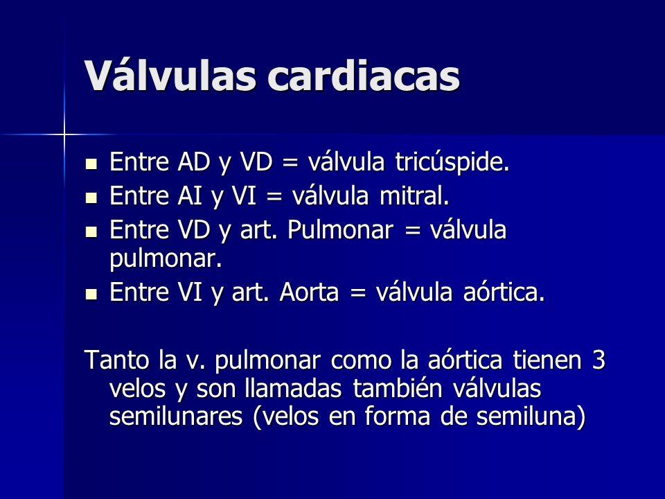 Válvulas cardiacas Entre AD y VD = válvula tricúspide. Entre AD y VD = válvula tricúspide. Entre AI y VI = válvula mitral. Entre AI y VI = válvula mit