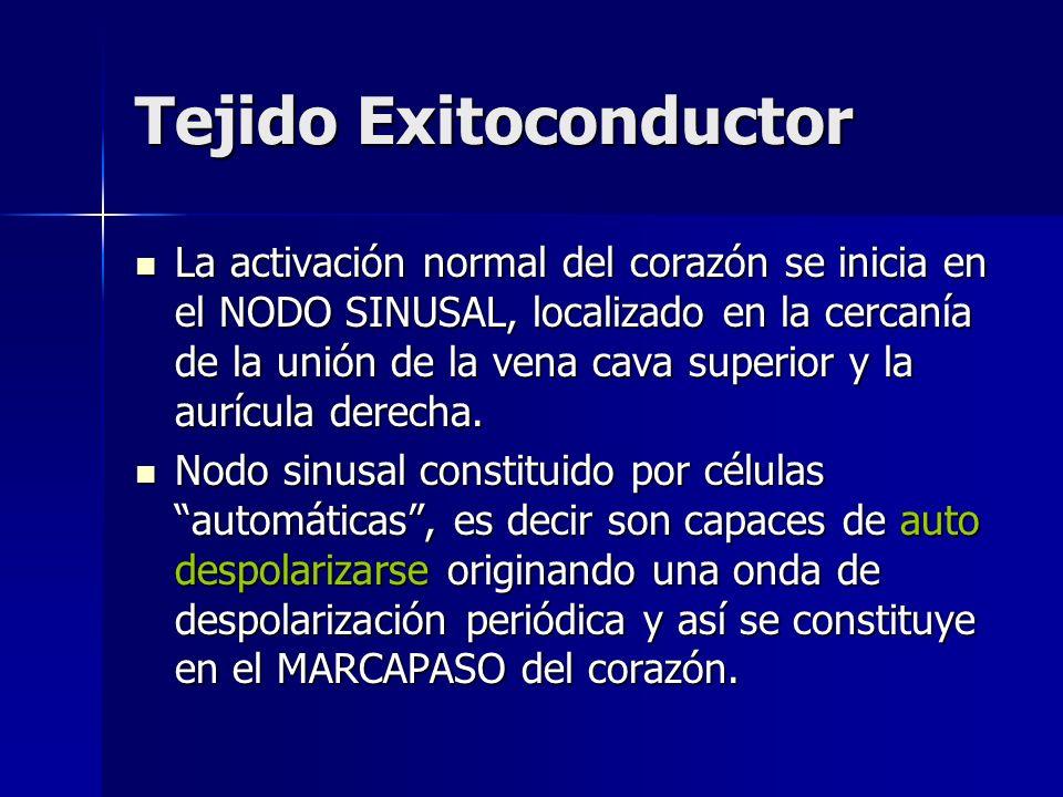 Tejido Exitoconductor La activación normal del corazón se inicia en el NODO SINUSAL, localizado en la cercanía de la unión de la vena cava superior y