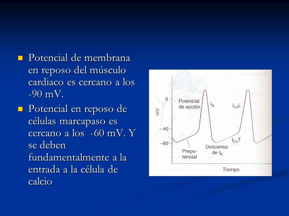 Potencial de membrana en reposo del músculo cardiaco es cercano a los -90 mV. Potencial de membrana en reposo del músculo cardiaco es cercano a los -9