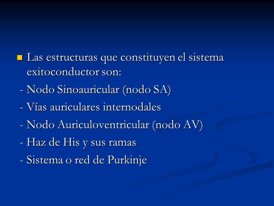 Las estructuras que constituyen el sistema exitoconductor son: Las estructuras que constituyen el sistema exitoconductor son: - Nodo Sinoauricular (no